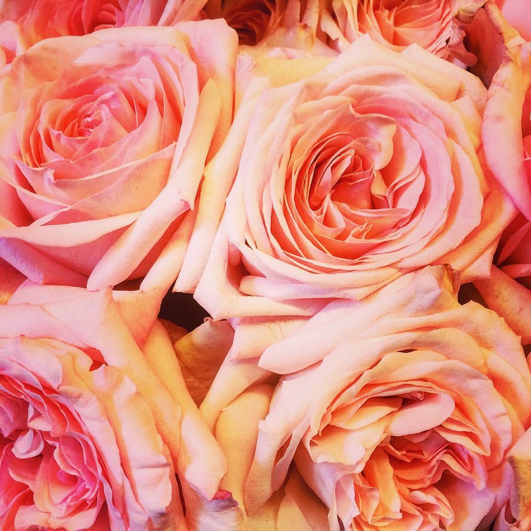 roses pinkohara damasqueroses perfume pink garden flowers flowershop antwerp