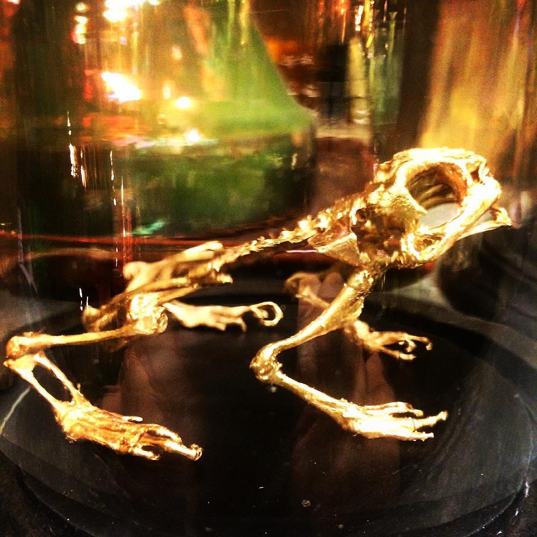 frog skeleton gold taxidermy animauxspeciaux curiosity mobach vases flowershop antwerp florartesantwerp
