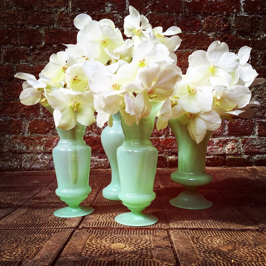 vanda orchid offwhite exotic vases palegreen flowers flowershop antwerp florartesantwerp