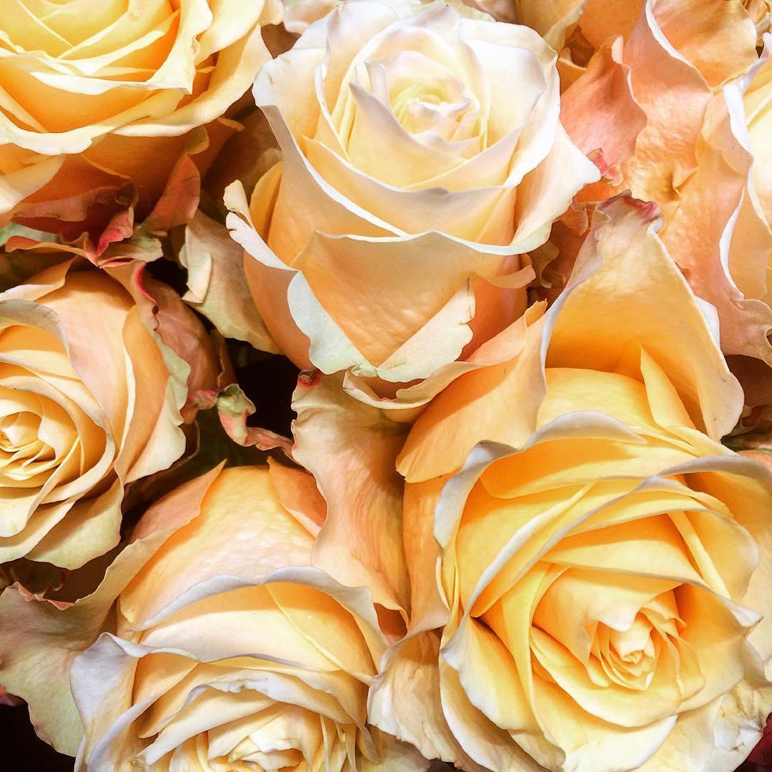 roses equador offwhite flowers mothersday flowershop antwerp florartesantwerp