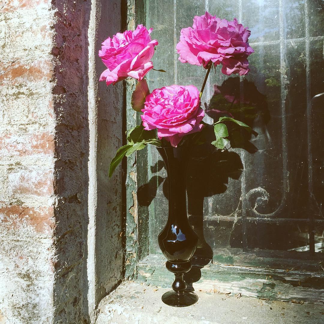 roses damasqueroses perfume yvespiaget fuchia pink black vase glass flowers flowershop antwerp florartesantwerp