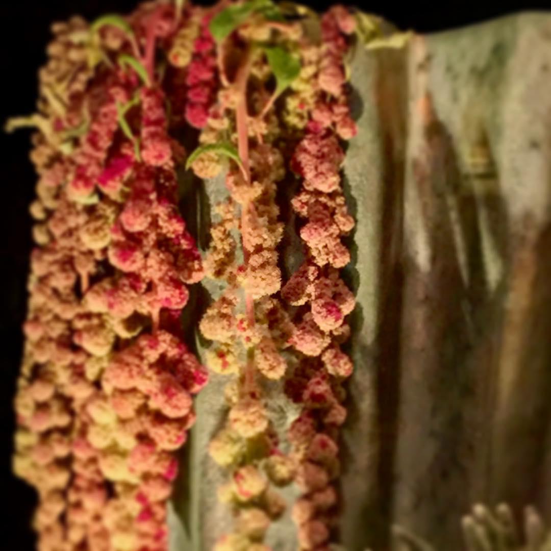 amaranthus vase mobach flowers autumn flowershop antwerp florartesantwerp