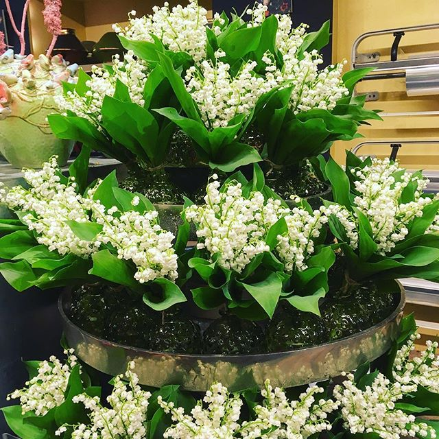 Today you give a small bouquet lilies of the valley to your dear ones to bring happiness and health