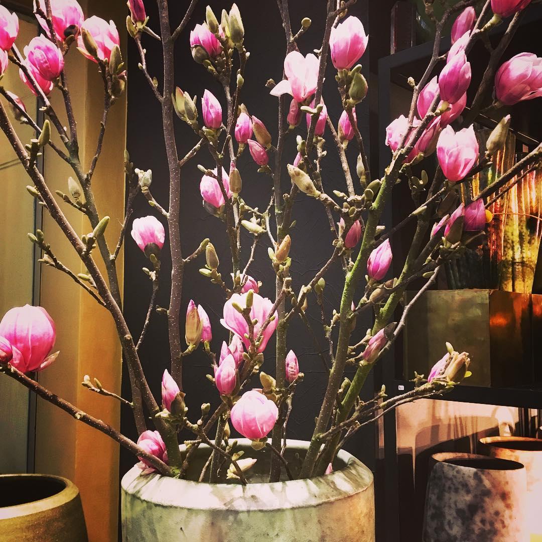 Magnoliatime