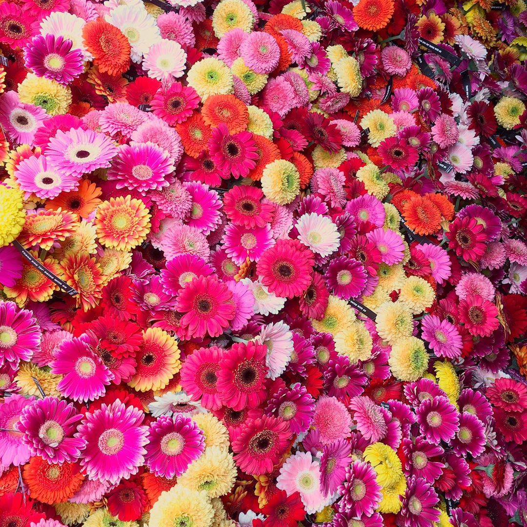 10.000 !!! Flowers are waiting for YOU !!! Join us tomorrow at Antwerp Pride Parade