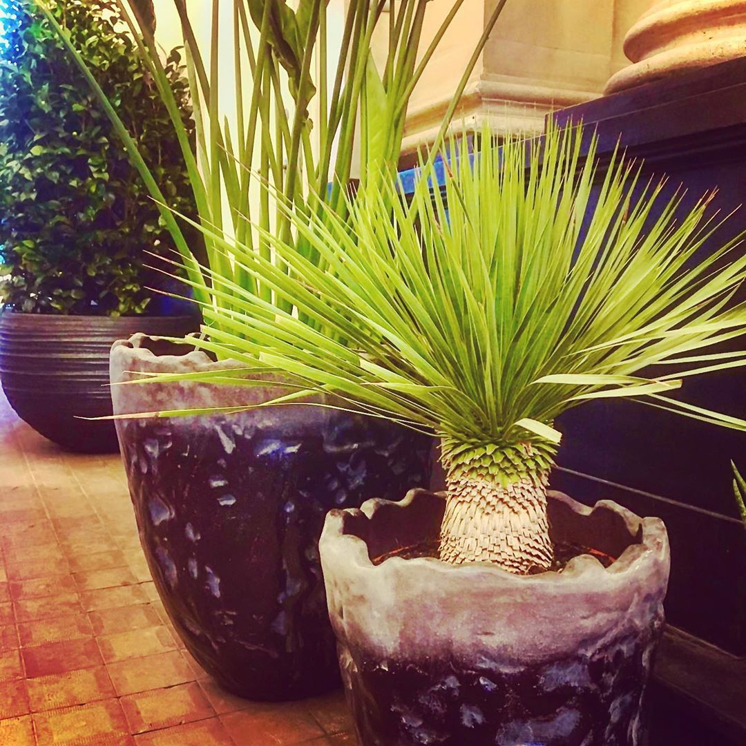 Beautiful plants deserve beautiful pots