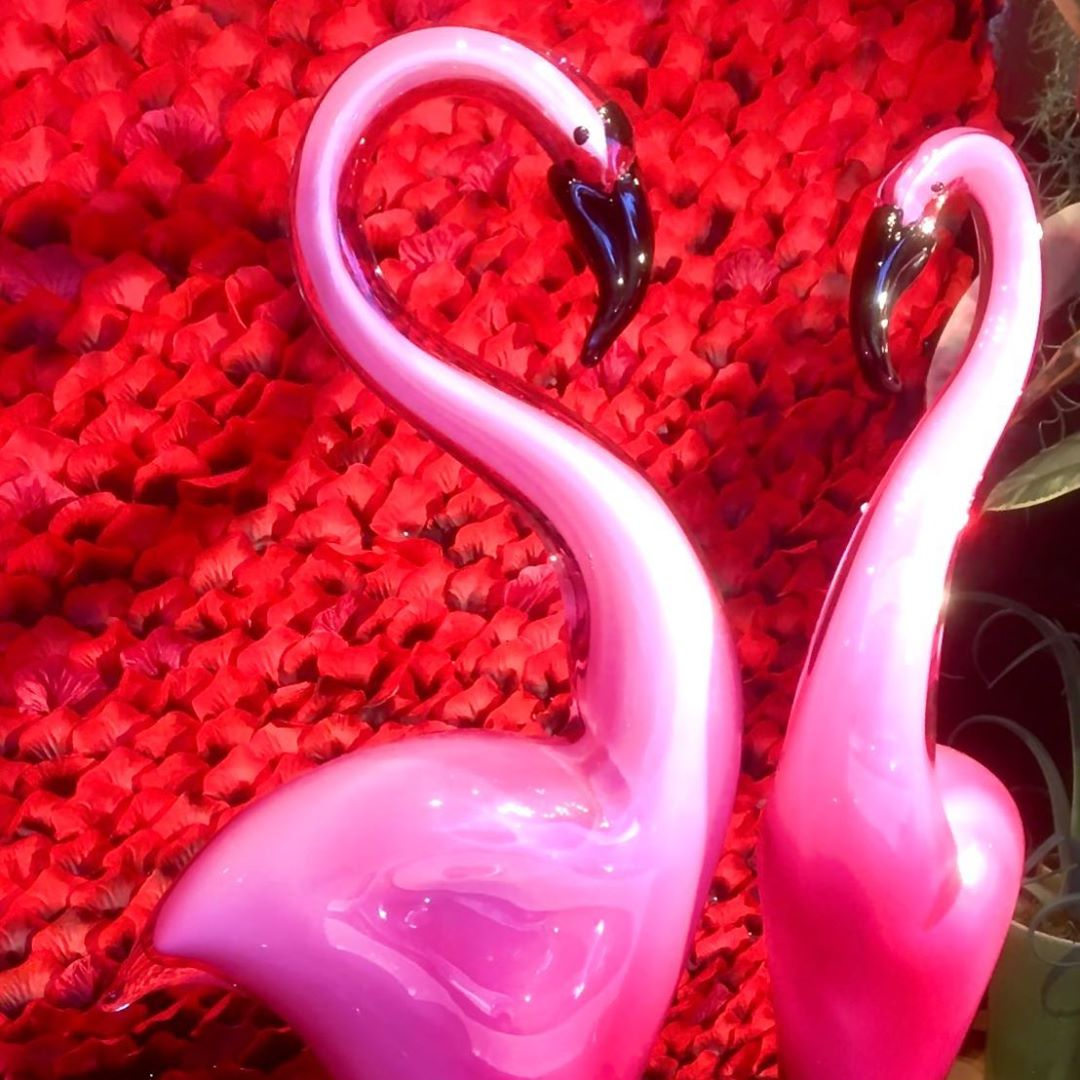 Our awesome flamingos are back